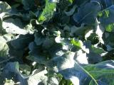 Brokkolili Avokadolu SebzeÇorbası